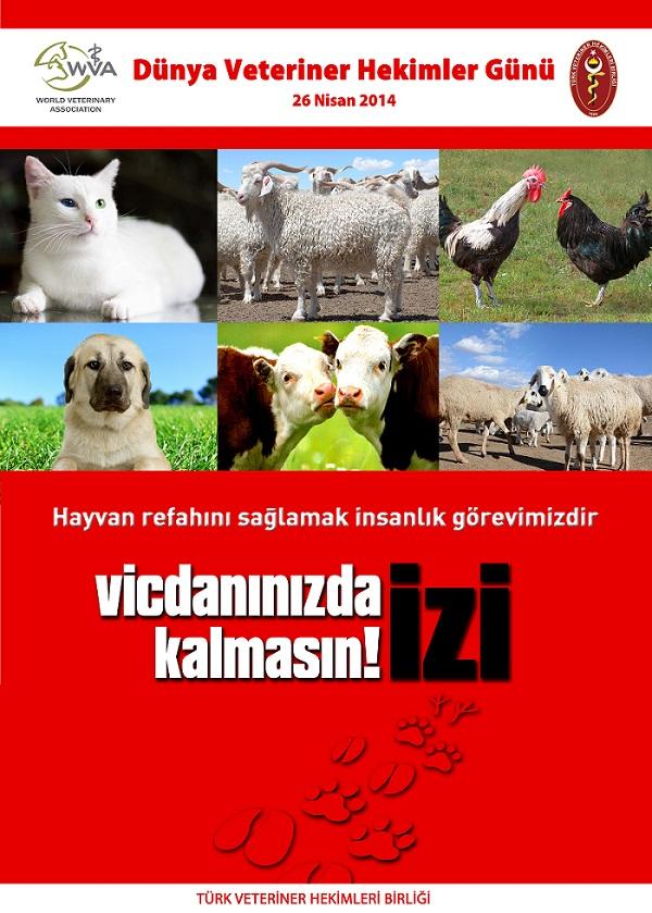 Foto: TVHB