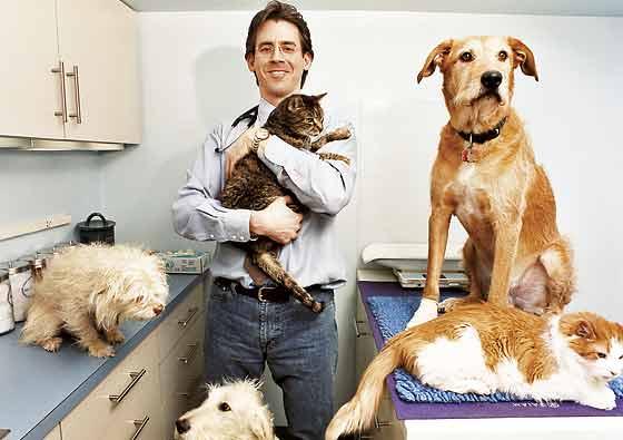 veteriner-hekimlerin-yetki-ve-gorevleri